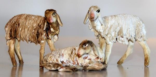 Schafe in verschiedenen Haltungen