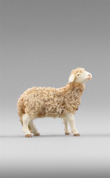 Schaf schauend Heide Nr. 236102