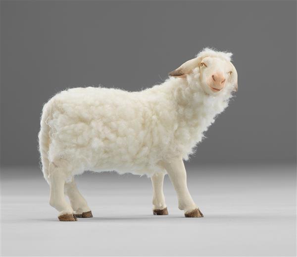 Schaf zurückschauend mit Wolle Heide Nr. W3610G