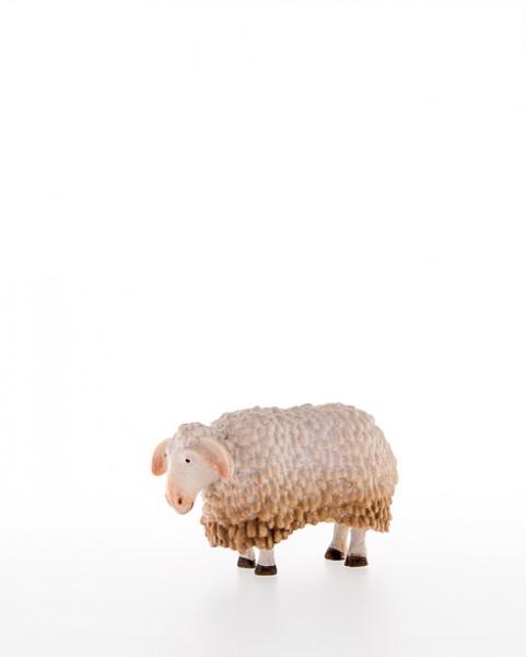 Schaf Nr. 16