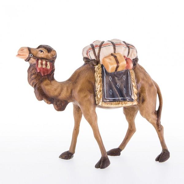 Kamel Nr. 24020