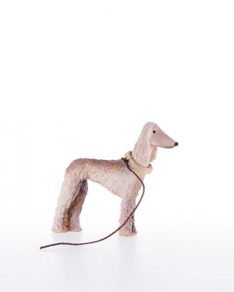 Afghanischer Windhund Nr. 26C