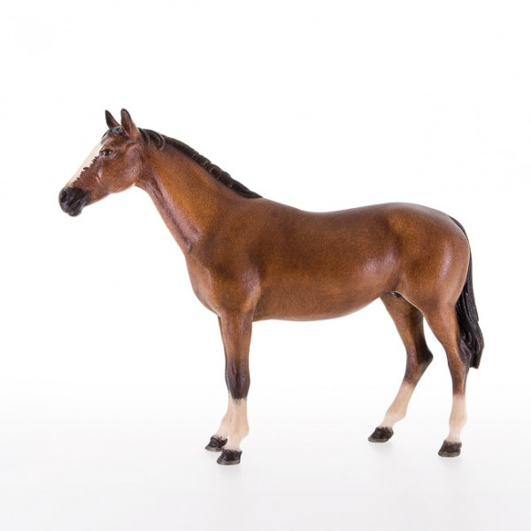 Pferd Nr. 21995