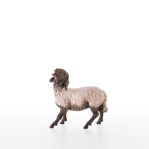 Schwarzkoepfiges Schaf Nr. 21203-AS