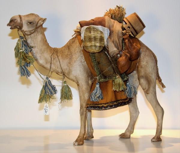 Kamel stehend Extra