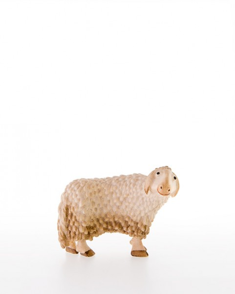 Schaf seitwaertsschauend Nr. 15