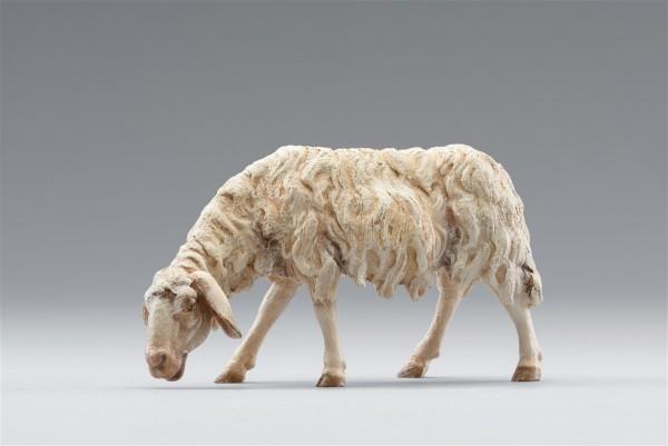 Schaf äsend Heide Nr. 236122