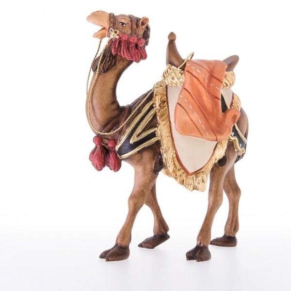 Kamel Nr. 24021