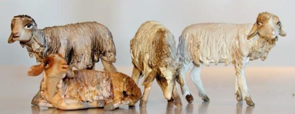 Schafe verschiedene Haltungen
